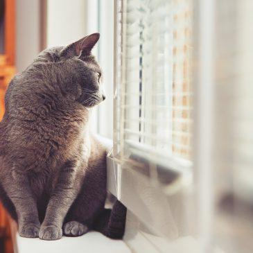 Come posso attivare il mio allarme se ho il gatto in casa?